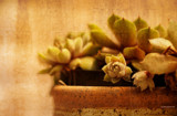 Cacti by doughlas, photography->manipulation gallery