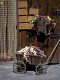 onion cart by bonur, Photography->Still life gallery