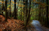 October Walk by casechaser, photography->manipulation gallery