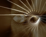 Inner Light by Mojave_Storm, Abstract->Fractal gallery