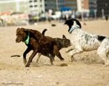 Run Away by avedeloff, photography->pets gallery