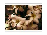 Strange Behavior by Hottrockin, photography->flowers gallery