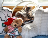 Bella And Friends by tigger3, photography->pets gallery