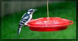 Dazed 'n' Confused by Hottrockin, Photography->Birds gallery