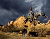 Joshua Tree, California by snapshooter87, photography->manipulation gallery