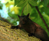 Squirrely by tigger3, photography->animals gallery