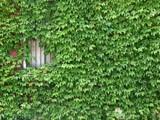 Overgrown by jojomercury, photography->city gallery
