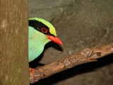 Aviary 6 by RobNevin, Photography->Birds gallery