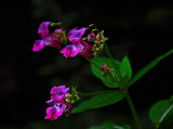 Good Stuff by biffobear, Photography->Flowers gallery