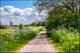 Country Trail 2 by corngrowth, photography->landscape gallery