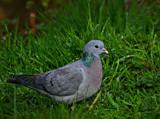 Pesky Bushytails by biffobear, photography->birds gallery