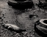 Criminal Pollution by snapshooter87, photography->shorelines gallery
