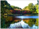 Autumn Brilliance by ccmerino, Photography->Landscape gallery