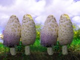 double the trouble by _whitewidow_, Photography->Mushrooms gallery