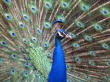 Animal Crackers XXXVII by Hottrockin, Photography->Birds gallery