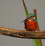 Good by biffobear, photography->birds gallery