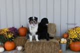 George, and Chuckie by tigger3, photography->pets gallery