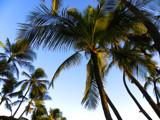 Hawaii, Waikiki by Eugene, Photography->Nature gallery