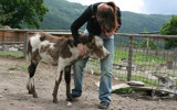Huggy Donkey by boremachine, photography->people gallery