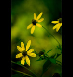 Yellow Petals by wbetz13, Photography->Flowers gallery
