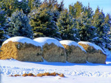 Frosted Cinnamon Rolls? by kidder, Photography->Landscape gallery
