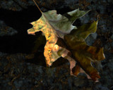 Leaf and Granite redux by Cyberbod, Photography->Still life gallery