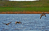 Fight path by biffobear, photography->birds gallery