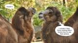 Stimulating Conversation by Jimbobedsel, photography->animals gallery