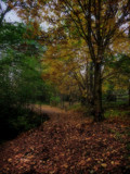 A Stroll around Thornley woods by biffobear, photography->nature gallery