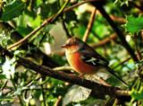 Little bird sitting in the treetop by biffobear, photography->birds gallery