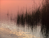 Morning Along the Marsh by allisontaylor, Photography->Shorelines gallery