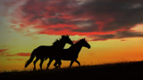 HORSES AT SUNRISE by LANJOCKEY, photography->animals gallery