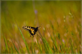In a Perfect World by djholmes, Photography->Butterflies gallery