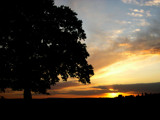 Oak Tree Sunset by krt, Photography->Sunset/Rise gallery