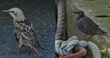 Stinkers by biffobear, photography->birds gallery