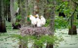 Nesting  44 by 100k_xle, Photography->Birds gallery