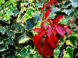 Signs Of Autumn #5 - The Red And The Green by braces, Photography->Nature gallery