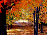 A Citrus look at Autumn! by marilynjane, Photography->Landscape gallery