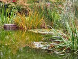 Pond and Reed by mia04, Photography->Shorelines gallery