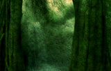 The Emerald Forest by trixxie17, photography->manipulation gallery