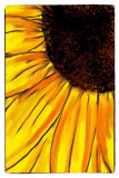 Brighten Your Day With A Sunflower by bfrank, illustrations gallery