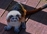 Neelix by biffobear, photography->animals gallery