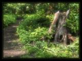 hide and seek by ekowalska, photography->landscape gallery
