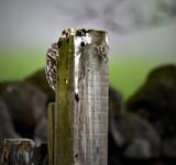Peek-a-Boo by biffobear, photography->birds gallery