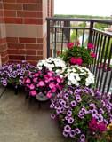 Balcony Garden by trixxie17, photography->flowers gallery