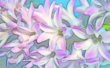 Scenting Spring by Tootles, photography->manipulation gallery