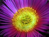 Heat Stroke - Original...sorta by Hottrockin, Photography->Flowers gallery