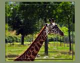 Geoffrey by Jimbobedsel, Photography->Animals gallery