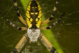 Super-Sized by unclejoe85, photography->insects/spiders gallery