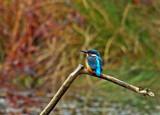 He's Back by biffobear, photography->birds gallery